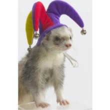Mopey Ferret Dance in a War Dance