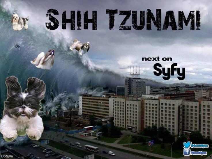 Shih Tzunami